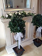 Bay trees complete with organza sashes and LED lights