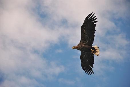EAGLE STAVE