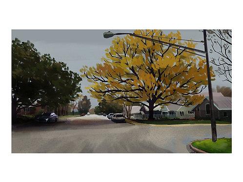 Texas winter tree