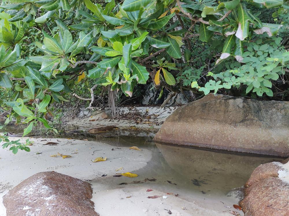 バブルス・ビーチ内で真水が流れるエリア
