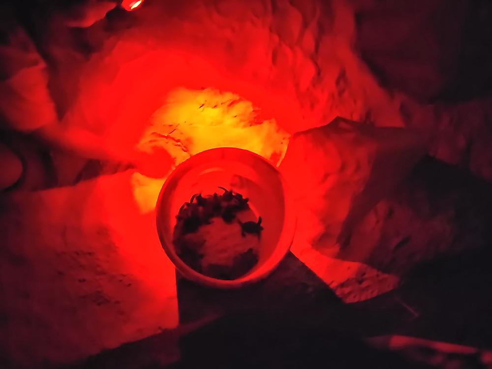 孵化した直後のウミガメ