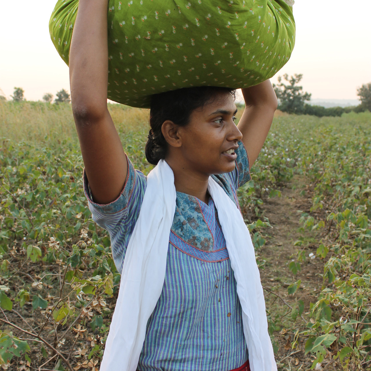 Shubhada carries our cotton