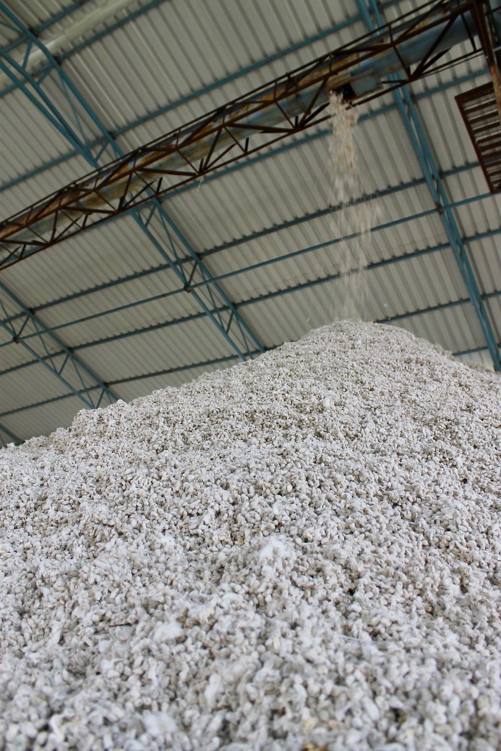 Billions of cotton seeds are pulled from cotton at a local ginning facility