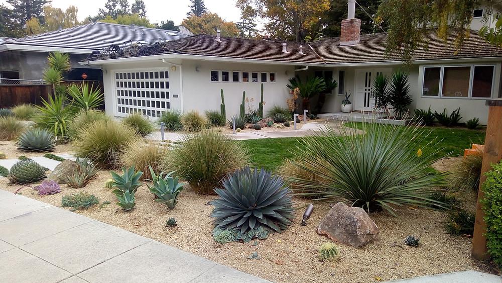 gravel mulch xeriscape desert landscape bay area garden design