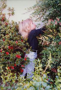 A child explores a Los Angeles garden 1990s, nandina and azalea