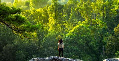 beauty-of-forest-banner.jpg