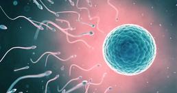 sperm.png
