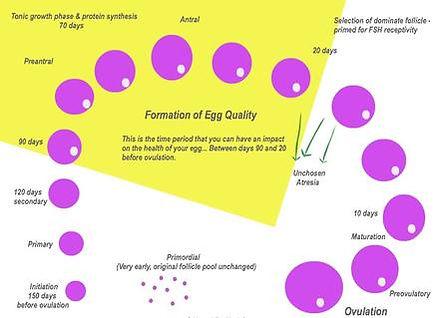 eggcycle.jpg