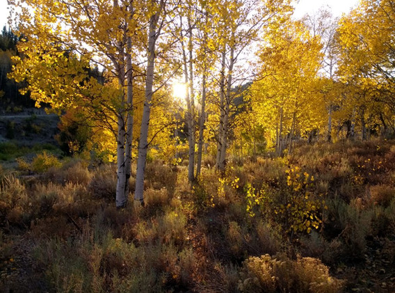 Evening Peace - American Fork Canyon