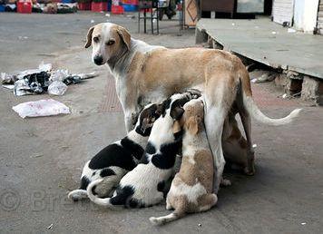 Entra em vigor no Brasil a lei que determina controle populacional de cães e gatos