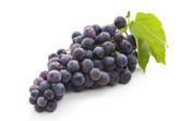 Concord Grape.jpg