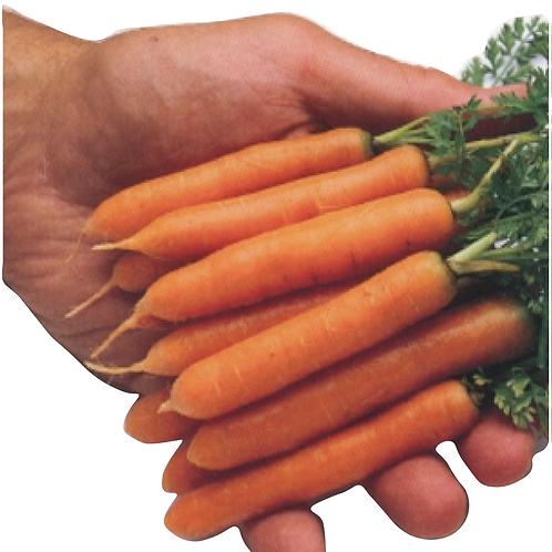 Little Finger Carrots