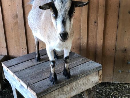 Piedmont Farm Animal Refuge