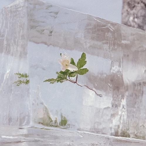 Efterklang - Windflowers - Clear Vinyl LP Released 08/10/21