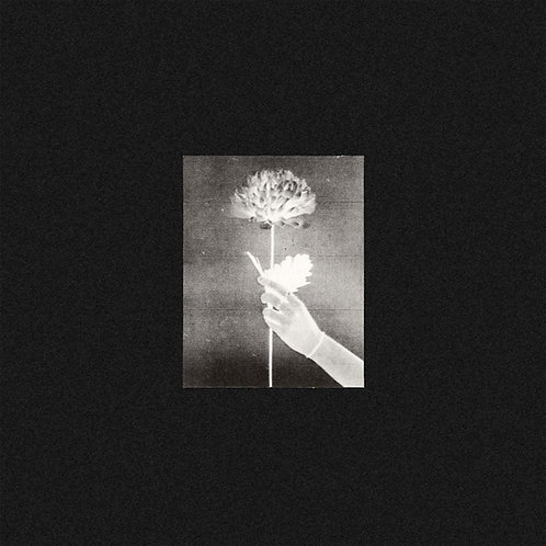 White Flowers - Day By Day CD Released 11/06/21