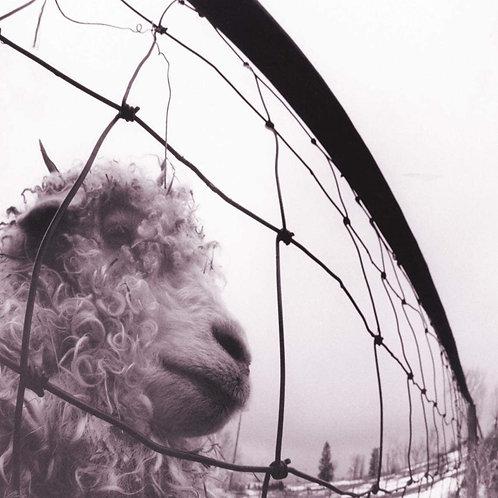 Pearl Jam Vs. LP