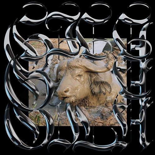 Gila - Trench Tones LP Released 14/06/19
