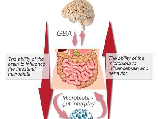 Heal Your Microbiome and Heal Your Brain