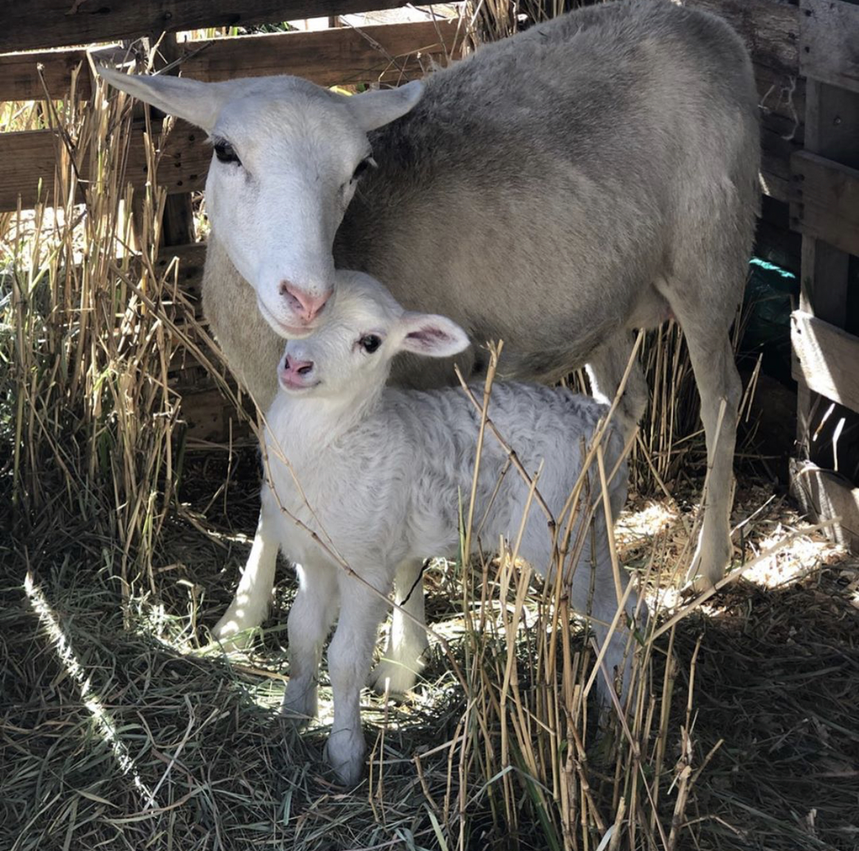 Debbie Hairy & her baby, Bella