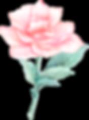 blushrose_edited.png