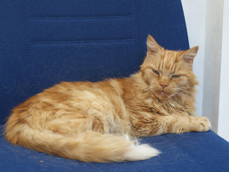 Can you help? We are trying to find out who owns this lovely cat.