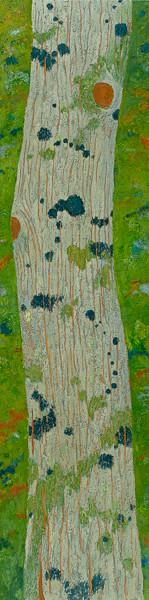 Blue Lichen, Eastern Hemlock
