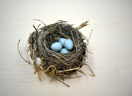 Full Nest, Empty Nest, COVID Nest, and the pain of letting go . . .