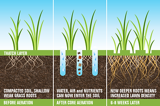 aeration illustration showing before and after aeration. Aeration will increase law density