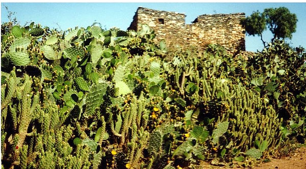 cactus-page-001_edited.jpg