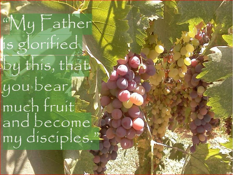 Discipleship is . . . A Call to be Pruned So We May Bear Fruit