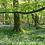Thumbnail: Retraite Silencieuse en pleine nature