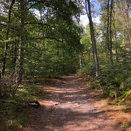 """Test de l'activité """"Escalade en forêt de Fontainebleau"""""""