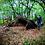 Thumbnail: Stage de Survie en milieu forestier