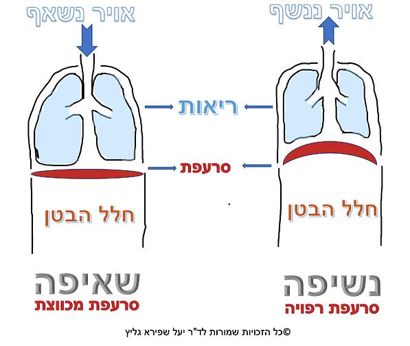 הסבר נשימה נשיפה