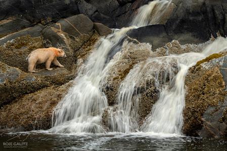 Roie Galitz Wildlife Photographer