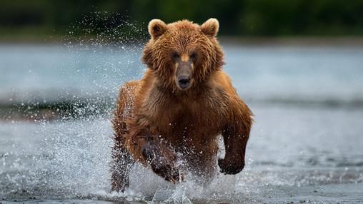 Kamchatka - Wild and Pure
