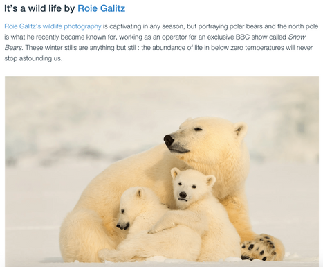 Roie Galitz, Wildlife Photogrpaher