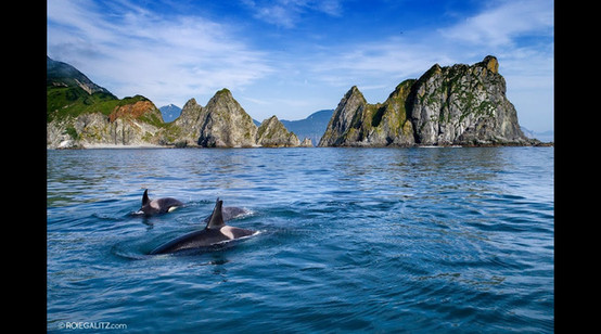 Orca in Kamchatka