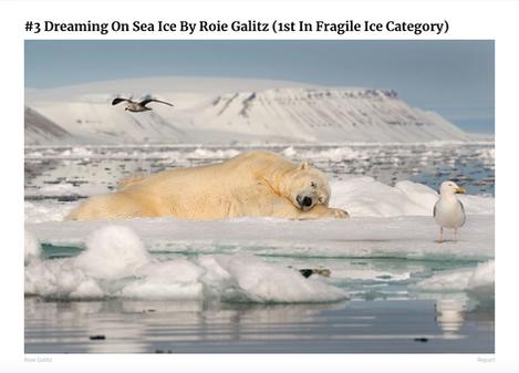Roie Galitz - Wildlife Photographer