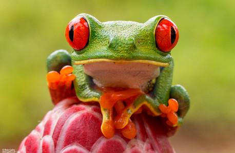 Roie Galitz - Wildlife Photography