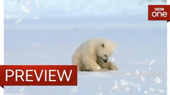 Snow Bears - BBC