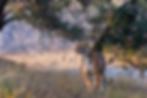 Screen Shot 2020-06-02 at 1.44.54 PM.png