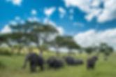 פילים.jpg