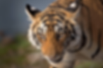 Screen Shot 2020-06-02 at 1.44.08 PM.png