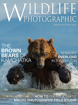 WP Issue 38 Cover.jpg