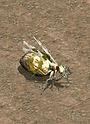 거대여왕개미.png