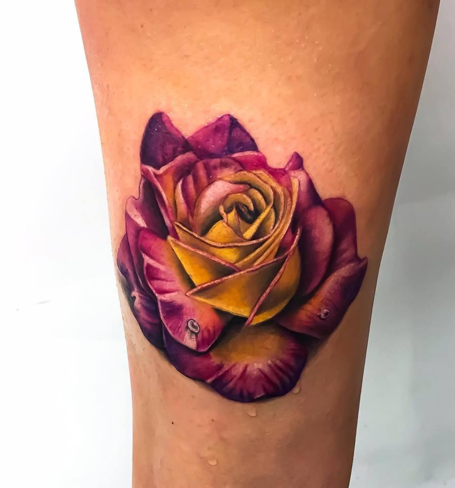 rose couleur réaliste