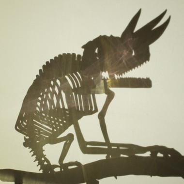 Jackson's chameleon skeleton (fume)
