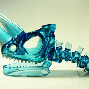 Jackson's chameleon skull