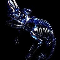 Jackson's chameleon skeleton (cobalt)